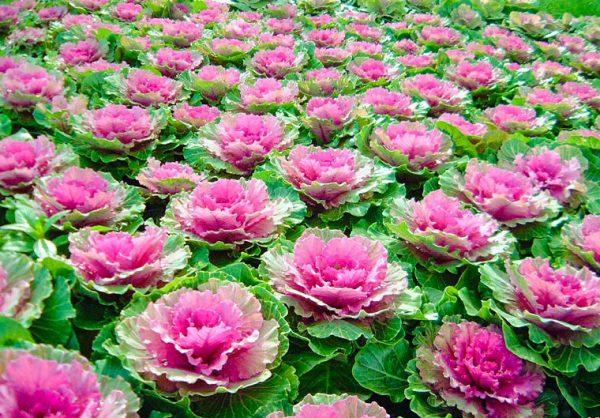 Giải mã những giấc mơ thấy hoa