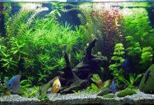 Lưu ý phong thủy khi nuôi cá cho người mệnh Thủy