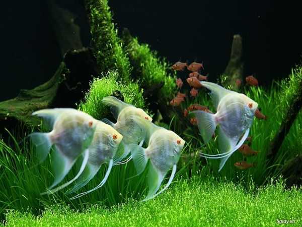 Lưu ý phong thủy khi nuôi cá cho người mệnh Thổ