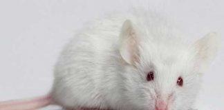 Giải mã giấc mơ thấy chuột? Mơ thấy chuột đánh con gì?
