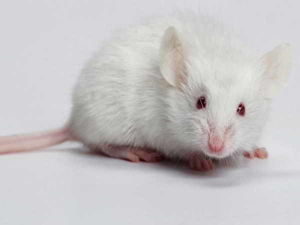 Giải mã giấc mơ thấy chuột? nằm mơ thấy chuột đánh con gì?