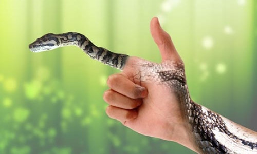 Mơ thấy 2 con rắn đánh con gì?