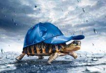 Giấc mơ thấy rùa có mang điềm báo tốt lành may mắn?