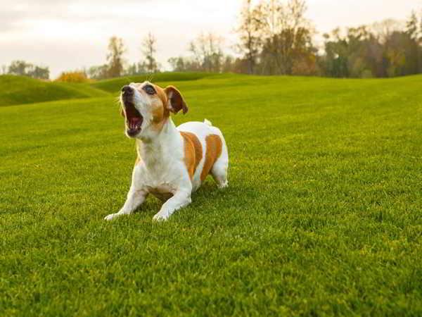 Điềm báo tiếng chó sủa và hình tượng chó trong văn hóa tâm linh