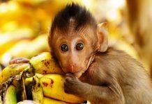 Nằm-mơ-thấy-khỉ-đánh-con-số-gì